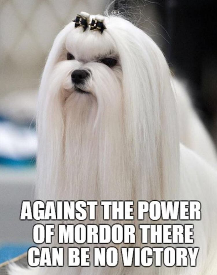 shitpost - Dog - AGAINST THE POWER OF MORDOR THERE CAN BE NO VICTORY