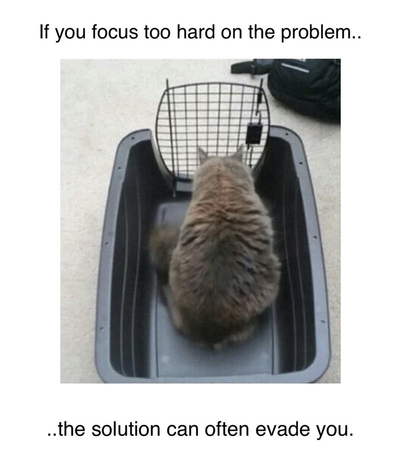 """Caption that reads, """"If you focus too hard on the problem, the solution can often evade you"""" with a photo of a cat trying to get out of its open crate"""