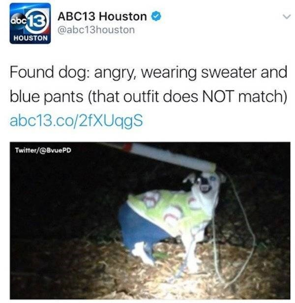 wtf - Text - abc13 ABC13 Houston @abc13houston HOUSTON Found dog: angry, wearing sweater and blue pants (that outfit does NOT match) abc13.co/2fXUqgS Twitter/@BvuePD