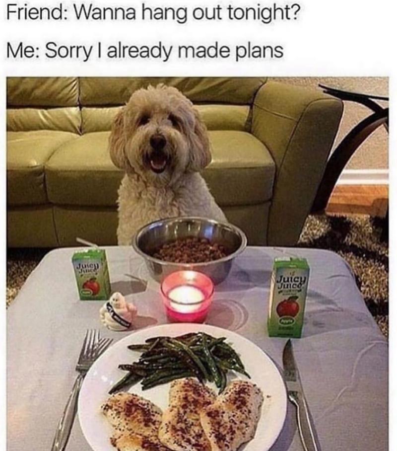 Dog - Friend: Wanna hang out tonight? Me: Sorry I already made plans Juich Juicy Juico