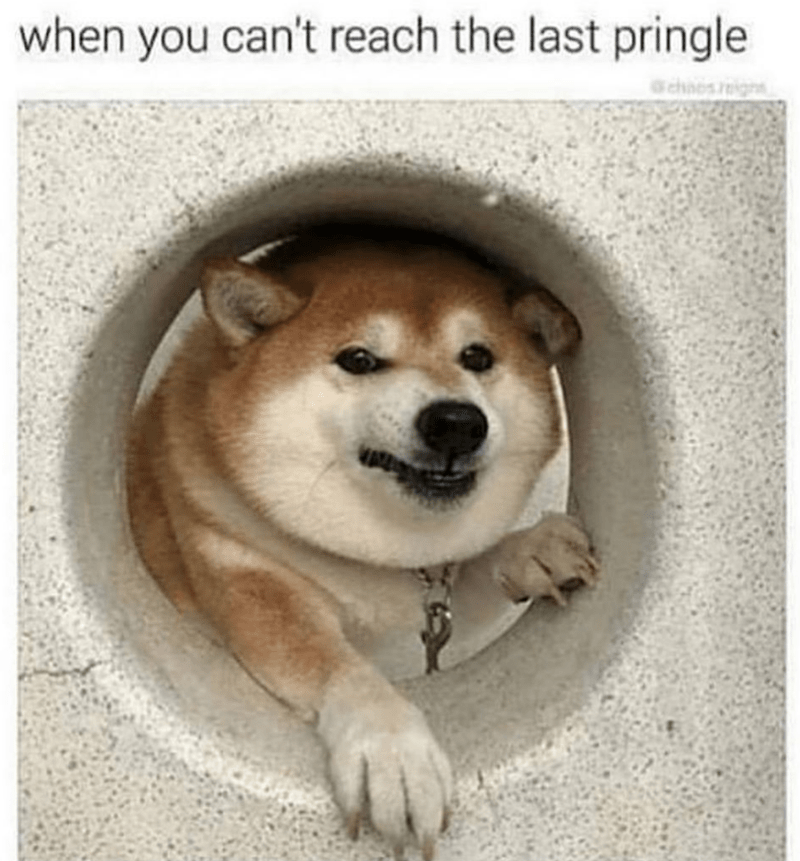 Dog - when you can't reach the last pringle a chaos r