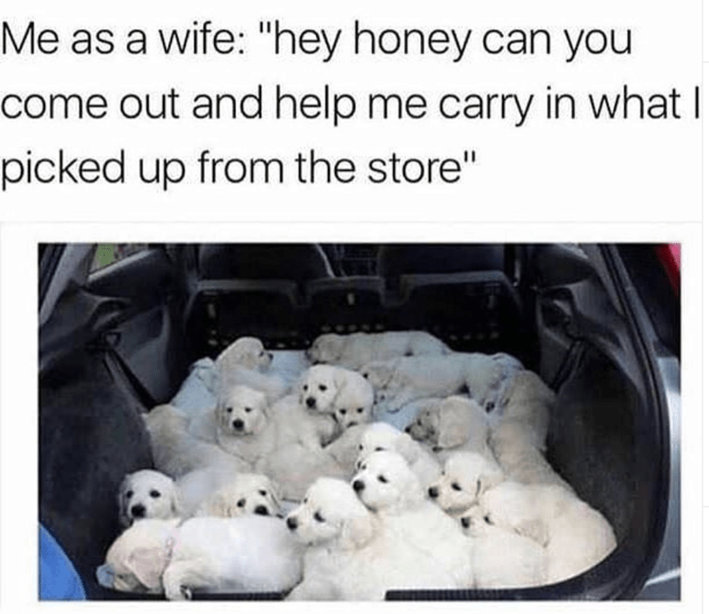 """Adaptation - Me as a wife: """"hey honey can you come out and help me carry in what I picked up from the store"""""""