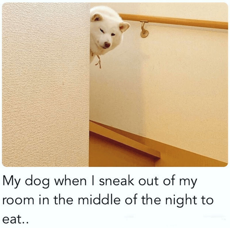 Door - My dog when I sneak out of my room in the middle of the night to eat..