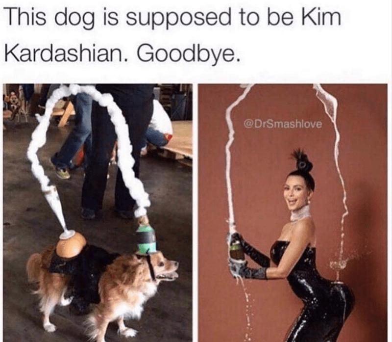 Human - This dog is supposed to be Kim Kardashian. Goodbye. @DrSmashlove