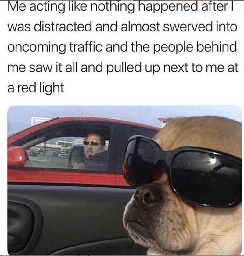 Dog - Me acting like nothing happened after was distracted and almost swerved into oncoming traffic and the people behind me saw it all and pulled up next to me at red light