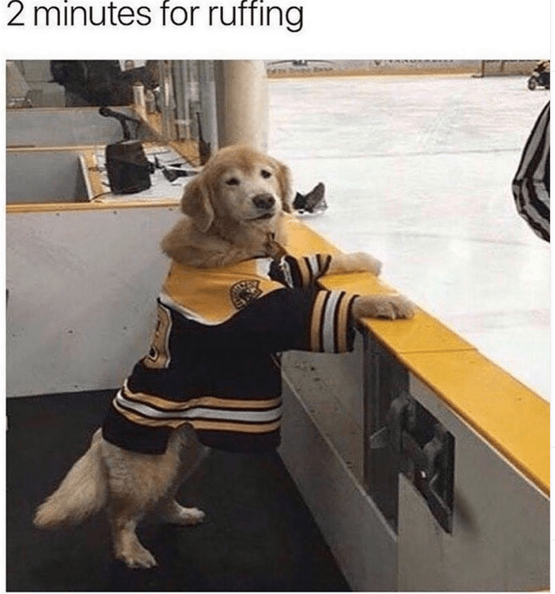 Dog - 2 minutes for ruffing