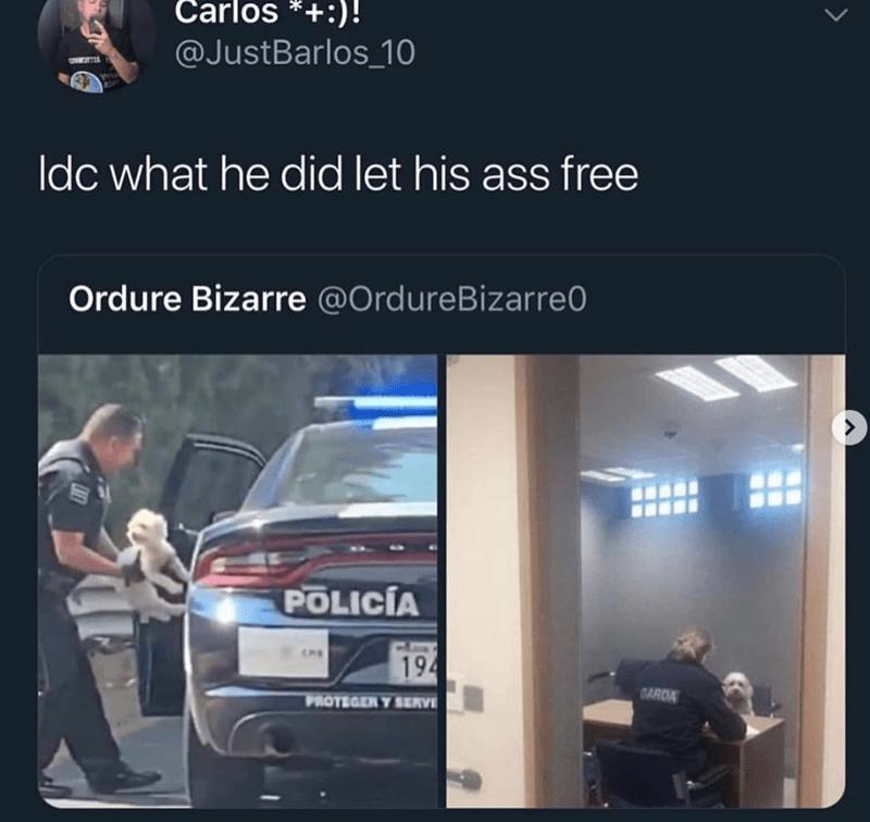 Product - Carlos *)! @JustBarlos 10 Idc what he did let his ass free Ordure Bizarre @OrdureBizarre0 POLICÍA 194 GARDA PROTEGER Y SERV >