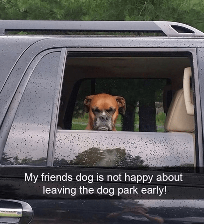 Dog - My friends dog is not happy about leaving the dog park early!