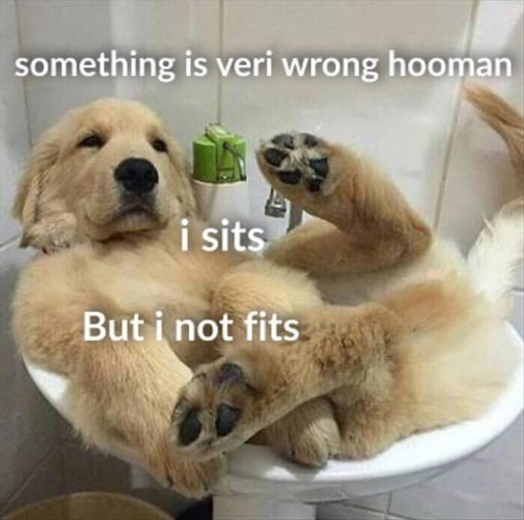 Mammal - something is veri wrong hooman i sits But i not fits