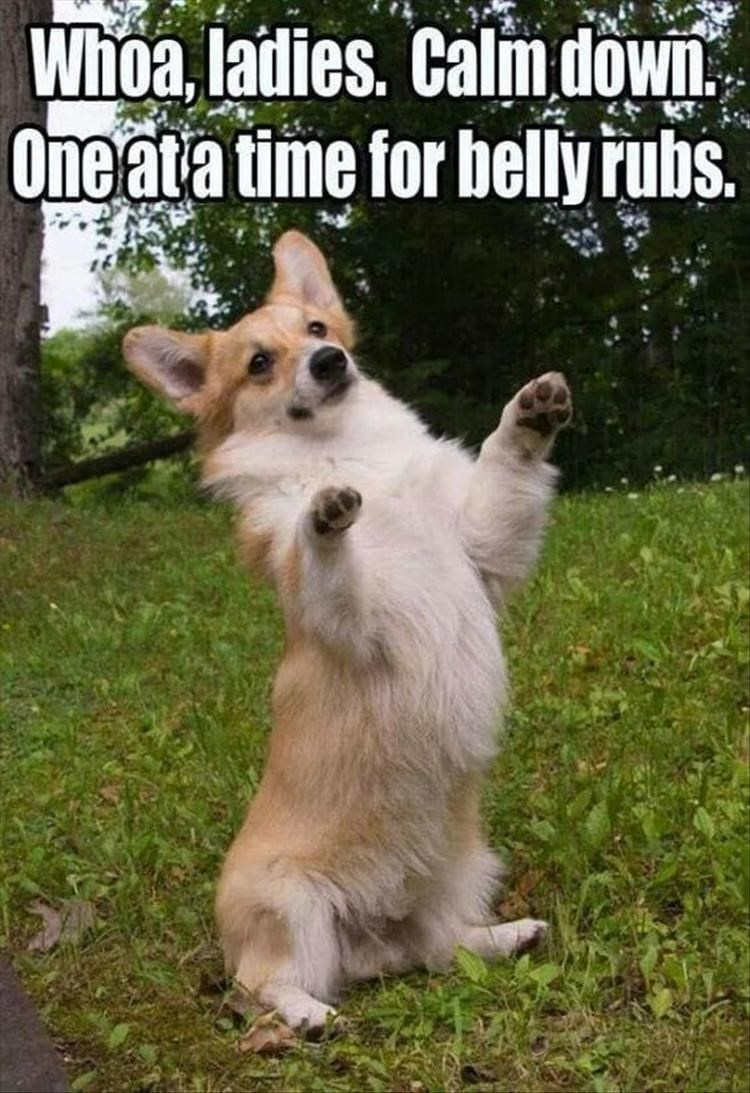 Dog breed - Whoa, ladies. Calmdown Oneata time for bellyrubs.