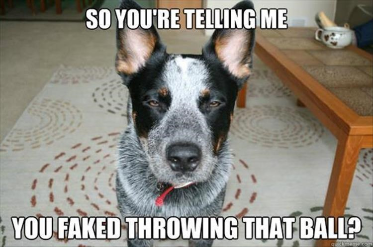 Dog - SO YOU'RE TELLING ME YOU FAKED THROWING THAT BALL qURkmeme.com