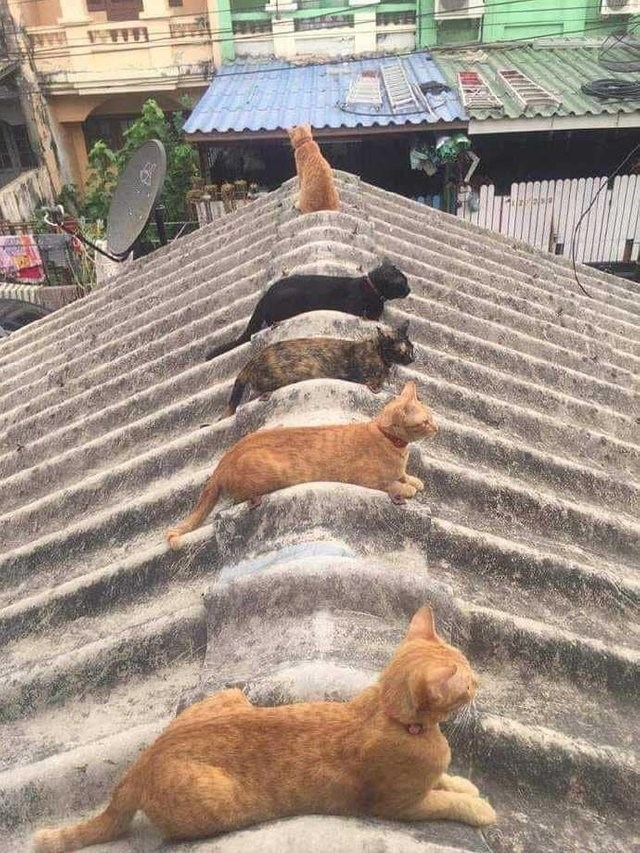 Roof cat loaves