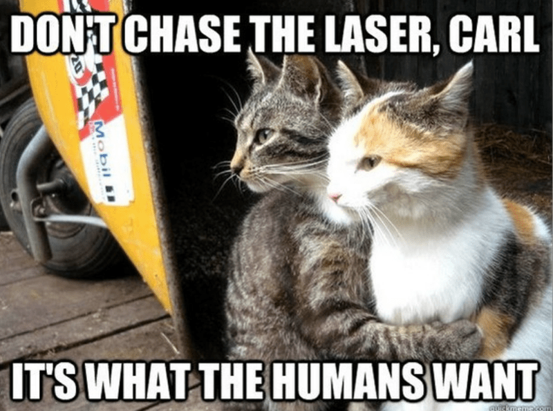 Cat - DONT CHASE THE LASER, CARL ITS WHAT THE HUMANS WANT AIskmamasom Mobil