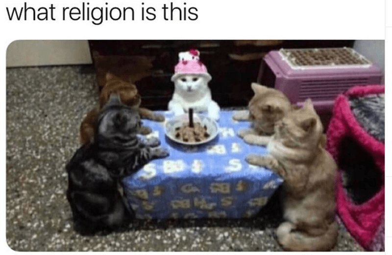 Dog breed - what religion is this 8- S cia
