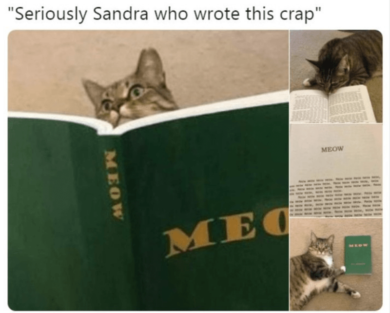 """Cat - """"Seriously Sandra who wrote this crap"""" MEOW MEC MEOW MEOW"""