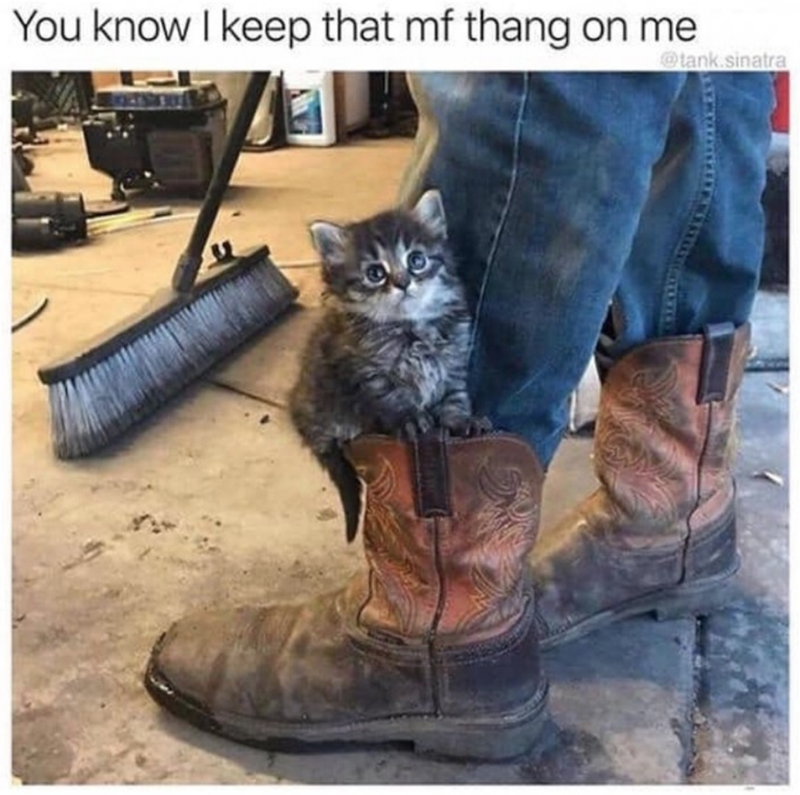 Cat - You know I keep that mf thang on me @tank.sinatra