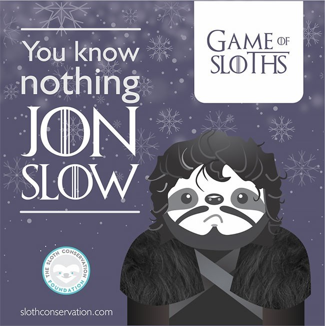 Text - GAME OF SLOTHS You know inothing JON SLOW EUNDATION slothconservation.com CEMKERVARIOY знь
