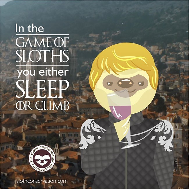 Cartoon - In the GAME OF SLOTHS you either SLEEP OR CLIMB slothconservation.com SERA NO SLOTH H FOU