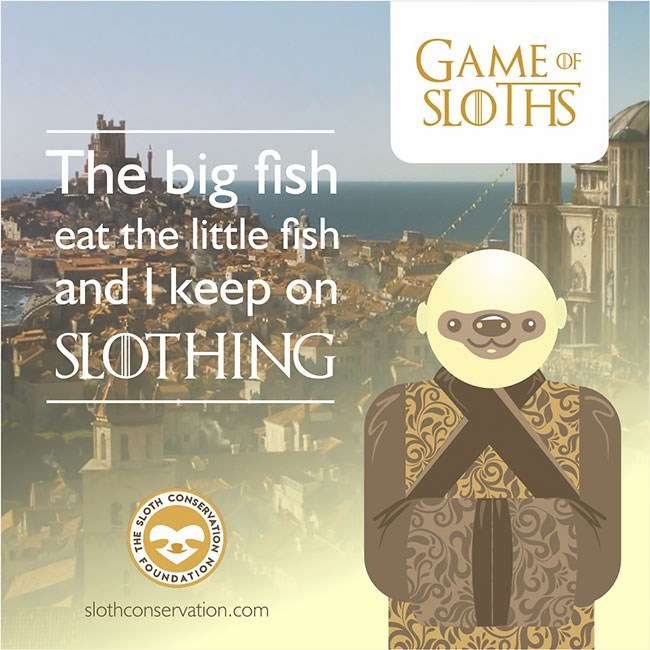 Text - GAME OF SLOTHS The big fish eat the little fish and keep on SLOTHING WEONKRCERICO CUHDATICEY slothconservation.com THE
