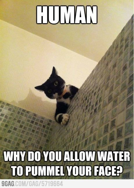 Cat - HUMAN WHY DO YOU ALLOW WATER TO PUMMEL YOUR FACE? quirkneme con 9GAG.COM/GAG/5719664