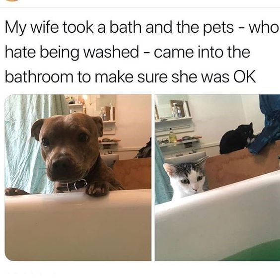 Dog - My wife took a bath and the pets - who hate being washed - came into the bathroom to make sure she was OK