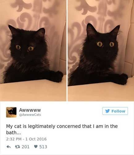Cat - Awwwww AwwwwCats Follow My cat is legitimately concerned that I am in the bath... 2:32 PM 1 Oct 2016 201 513