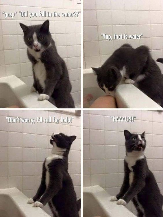 """Cat - gasp Did you full in the wuter?"""" """"Yup, that is water HAAALP! """"Don'tworry, Hl call for help!"""""""