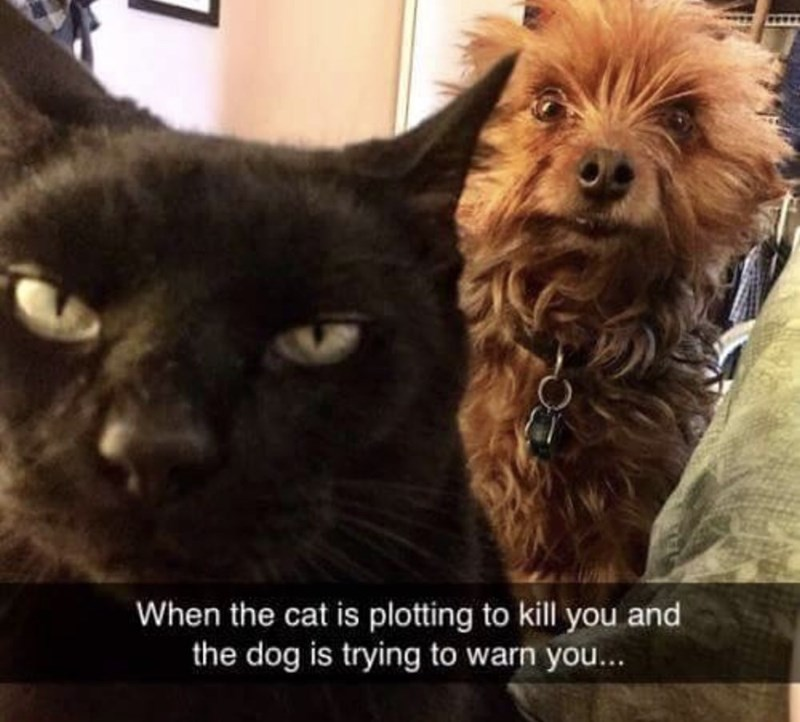"""Funny photo of a cat and dog with Snapchat caption that read, """"When the cat is plotting to kill you and the dog is trying to warn you..."""""""