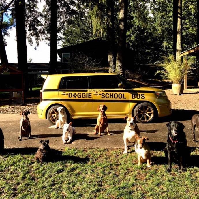 Car - 503-705-3926 D GGIE SCHOOL BUS