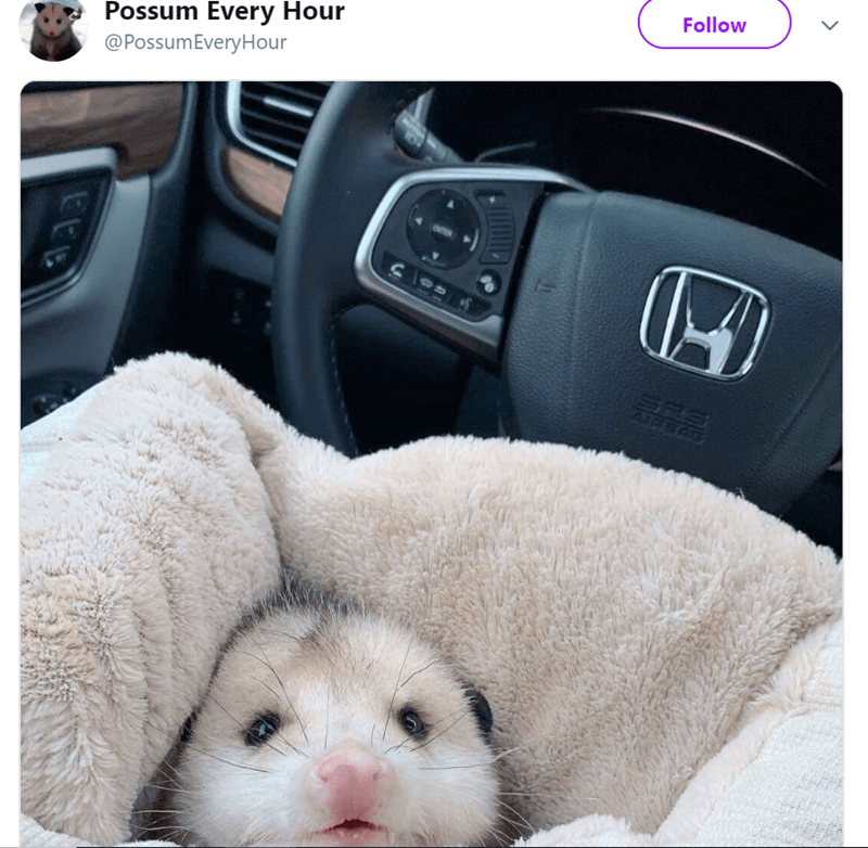 possum pics - Car seat - Possum Every Hour @PossumEveryHour Follow EEB