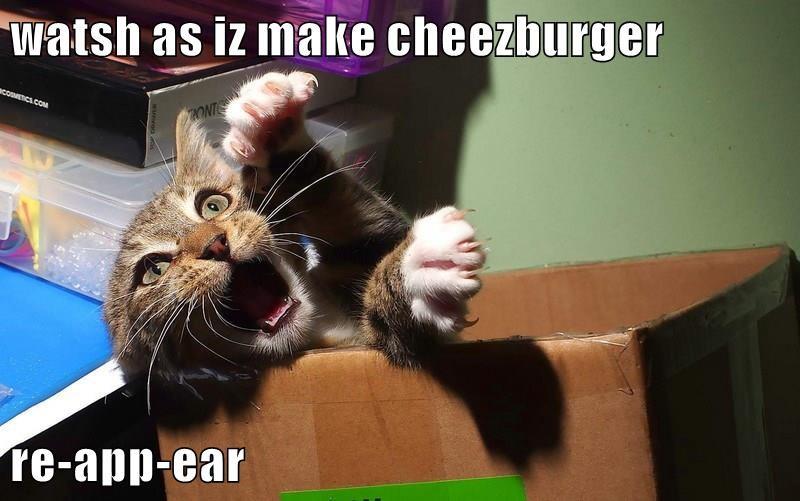 Cheezburger Image 9306936576