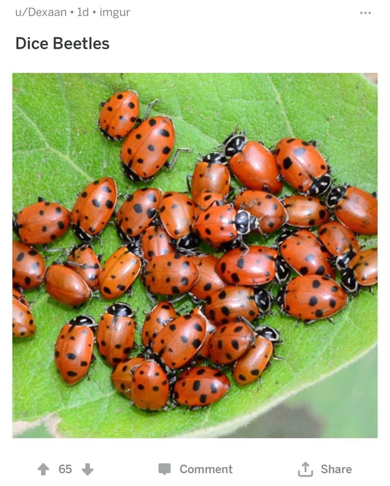 Insect - u/Dexaan 1d imgur Dice Beetles TShare 65 Comment