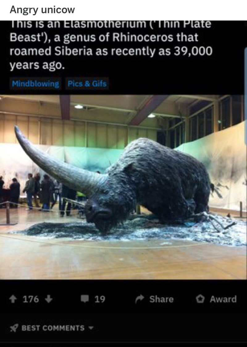 Poster - Angry unicow This is an Elasmotherium ('Thin Plate Beast'), a genus of Rhinoceros that roamed Siberia as recently as 39,000 years ago. Mindblowing Pics & Gifs t 176 Share 19 Award BEST COMMENTS