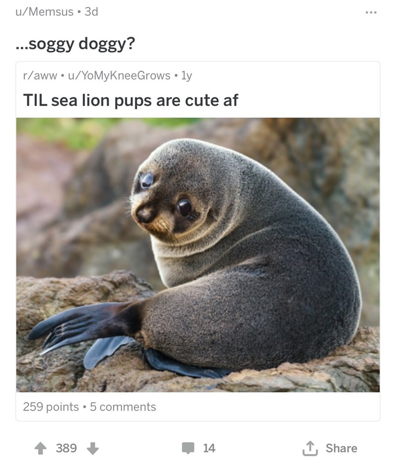 Fur seal - u/Memsus 3d ...soggy doggy? r/aww.u/YoMyKneeGrows ly TIL sea lion pups are cute af 259 points 5 comments 1Share 389 14