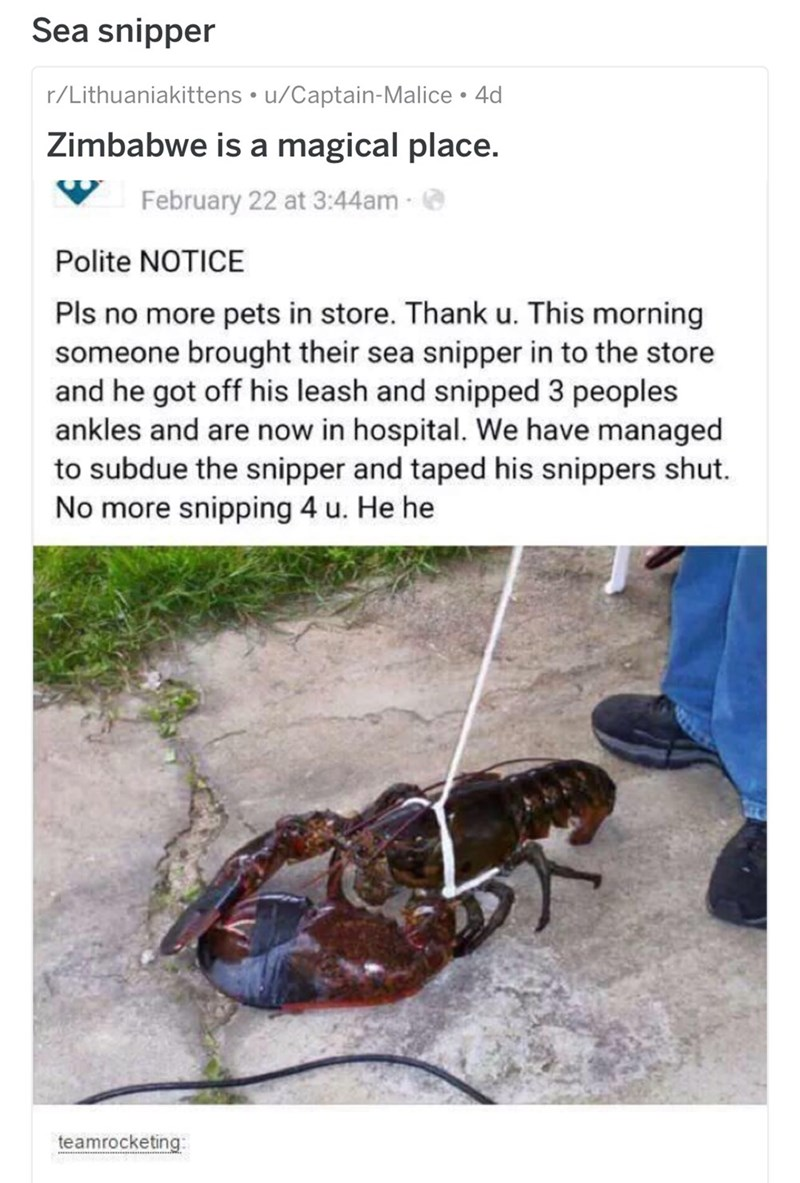 Insect - Sea snipper r/Lithuaniakittens u/Captain-Malice 4d Zimbabwe is a magical place. February 22 at 3:44am Polite NOTICE Pls no more pets in store. Thank u. This morning someone brought their sea snipper in to the store and he got off his leash and snipped 3 peoples ankles and are now in hospital. We have managed to subdue the snipper and taped his snippers shut. No more snipping 4 u. He he teamrocketing: