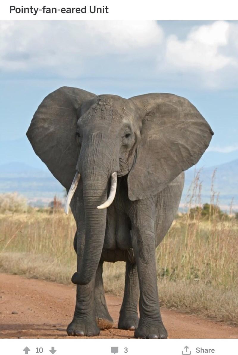 Elephant - Pointy-fan-eared Unit L Share 10 3