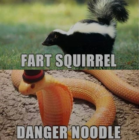funny name - Terrestrial animal - FART SQUIRREL DANGER NOODLE