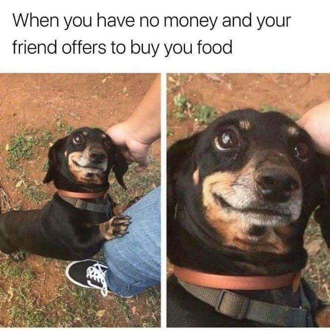 """Caption that reads, """"When you have no money and your friend offers to buy you food"""" above a photo of a cute little dog looking happy"""