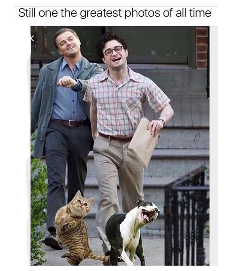 """Caption that reads, """"Still one of the greatest photos of all time"""" above a photo of Daniel Radcliffe, Leonardo DiCaprio, a dog and a cat skipping down the street happily"""