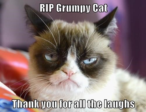 grumpy cat cream cat with dark patches over eyes and sour expression