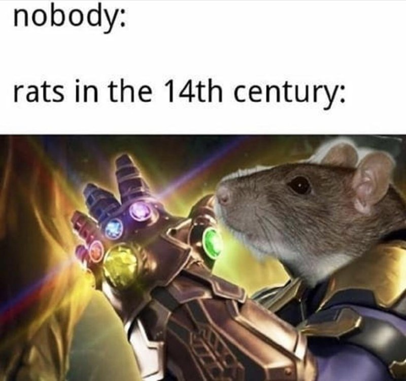Thanos meme from AVengers: Endgame, rats in the 14th century