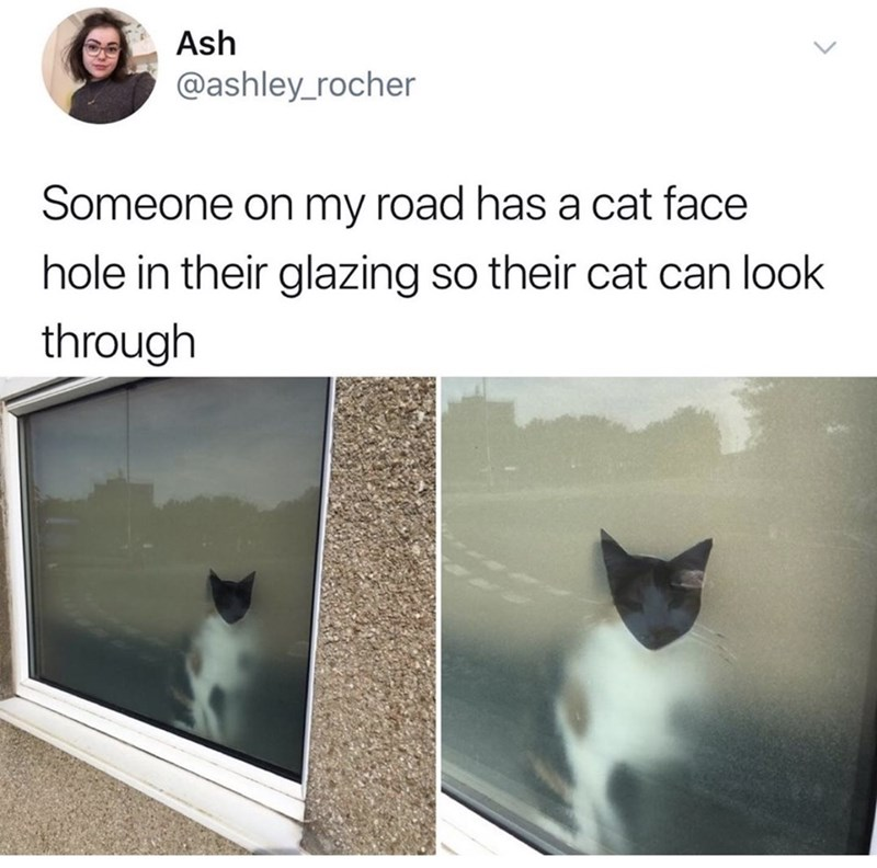 dank memes - Cat - Ash @ashley_rocher Someone on my road has a cat face hole in their glazing so their cat can look through