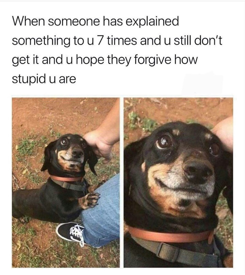 "Caption that reads, ""When someone has explained something to u seven times and you still don't get it and u hope they forgive how stupid u are"" above photos of a cute little dog"