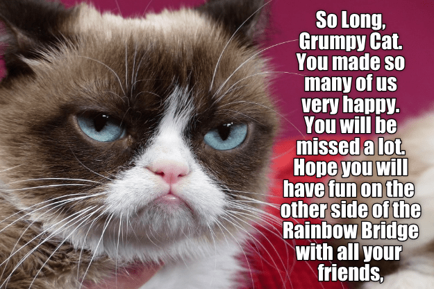cat meme - Cat - So Long, Grumpy Cat You made so many of us very happy. You will be missed a lot Hope you will have fun on the other side of the Rainbow Bridge with all your friends,