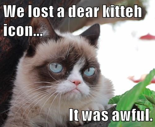 cat memes - cat meme We lost a dear kitteh icon... It was awful.