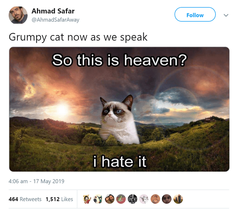 Sky - Ahmad Safar Follow @AhmadSafarAway Grumpy cat now as we speak So this is heaven? i hate it 4:06 am 17 May 2019 464 Retweets 1,512 Likes