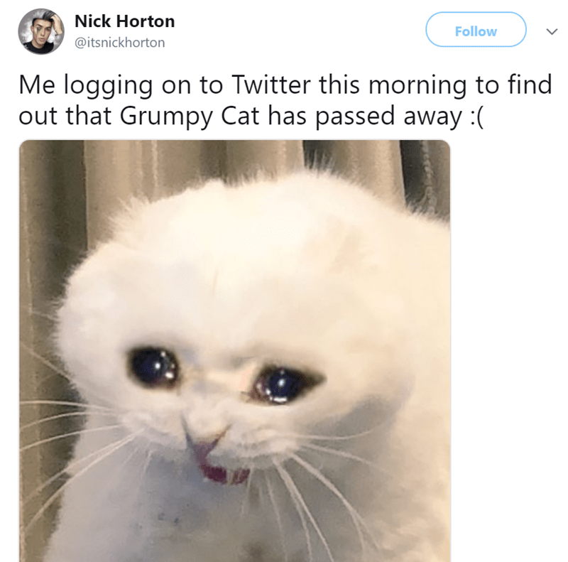 Cat - Nick Horton Follow @itsnickhorton Me logging on to Twitter this morning to find out that Grumpy Cat has passed away: