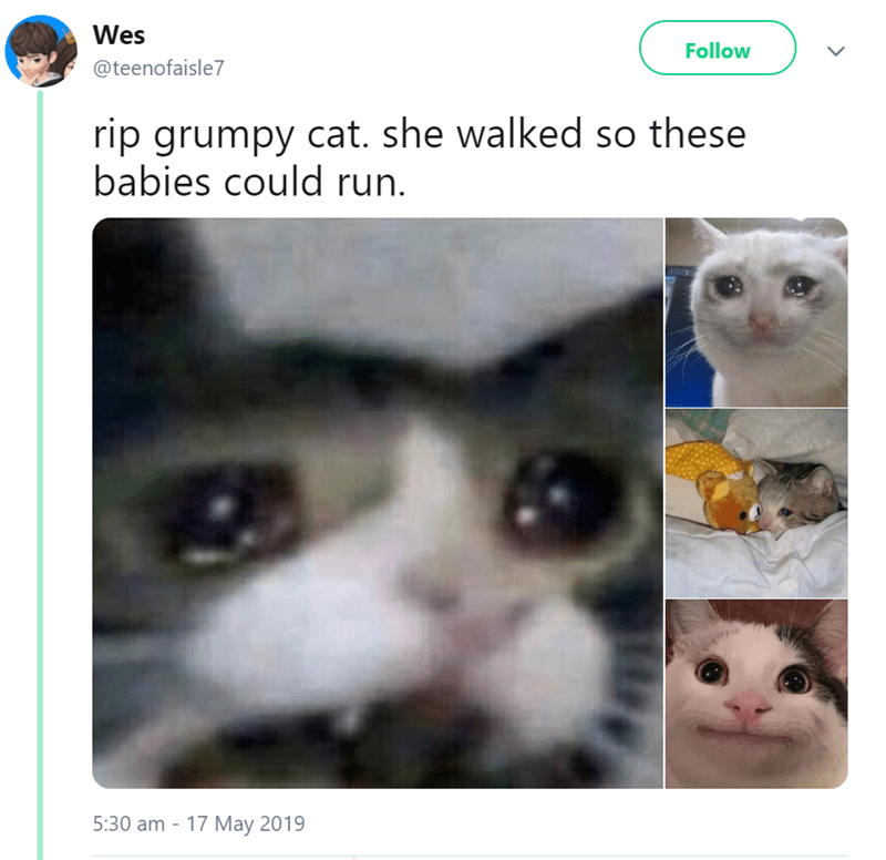Cat - Wes Follow @teenofaisle7 rip grumpy cat. she walked so these babies could run. 5:30 am - 17 May 2019