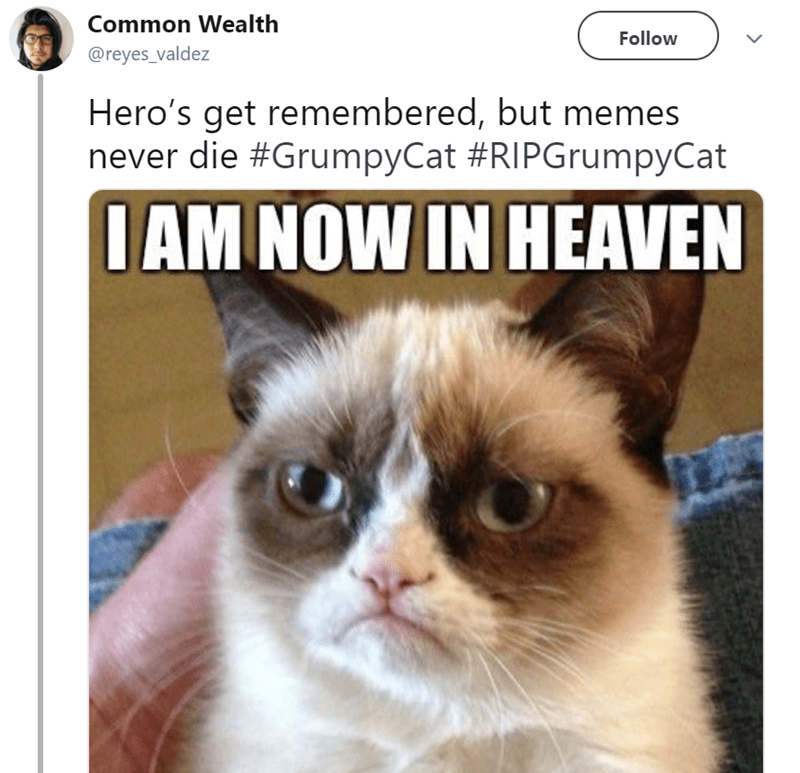 Cat - Common Wealth Follow @reyes_valdez Hero's get remembered, but memes never die #GrumpyCat #RIPGrumpyCat IAM NOW IN HEAVEN