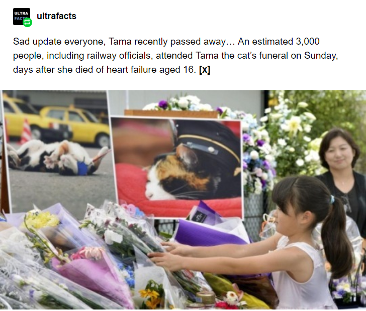 Community - ULTRA ultrafacts FACT Sad update everyone, Tama recently passed away... An estimated 3,000 people, including railway officials, attended Tama the cat's funeral on Sunday, days after she died of heart failure aged 16. [X]